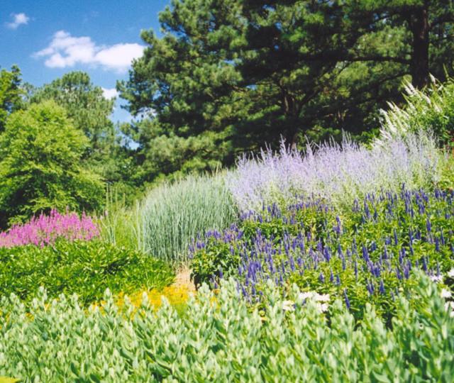 http://siskaaurand.com/wp-content/uploads/2013/01/norfolk-botanical2-640x540.jpg